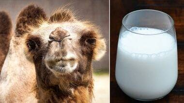Camel Milk – Best Natural Remedy For Autism