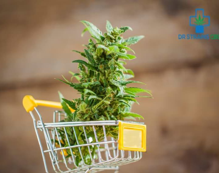 05 Mistakes to Avoid While Buying Hemp Flower for Sale Online