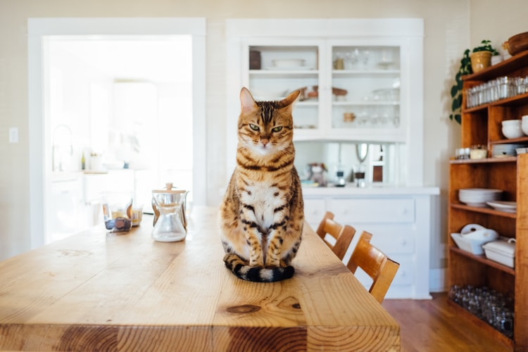 05 Things you need to Know about Taking Care of a Cat