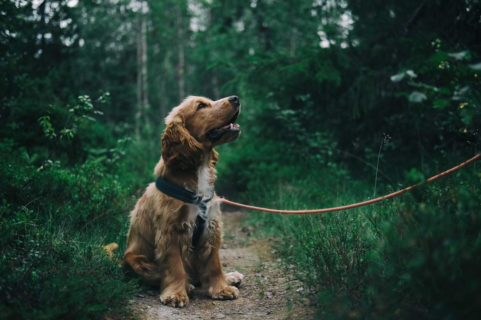 Different Breeds May Require Different Insurance Plans