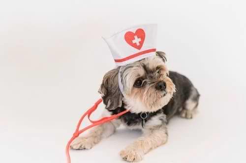 High Veterinary Costs