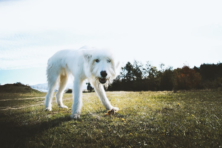 Top Reasons Why Dog Health Insurance Is Beneficial For Pet Owners