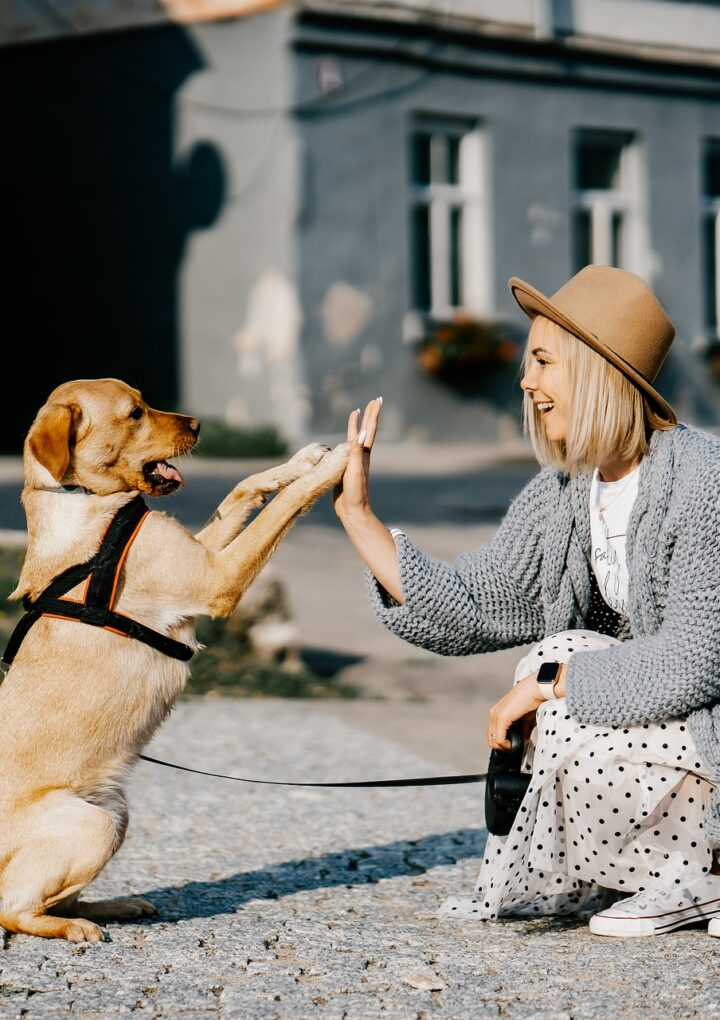 How to improve the experience of traveling with your dog