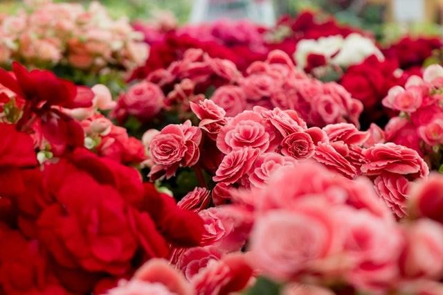The Top 11 most amazing flowers in the world!