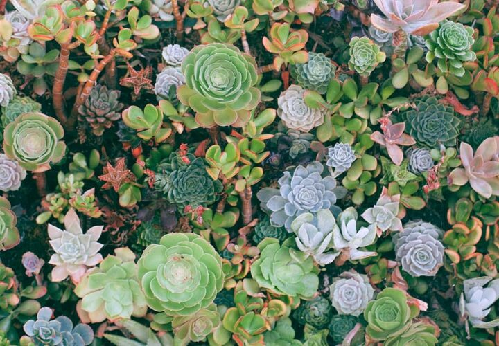 4 Things About Succulents We All Need to Stop Believing