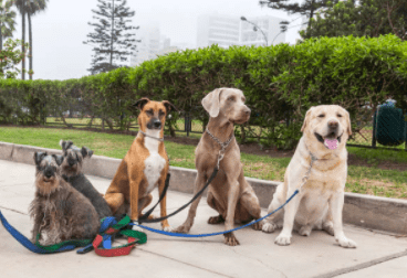 How To Choose The Right Dog Sitter