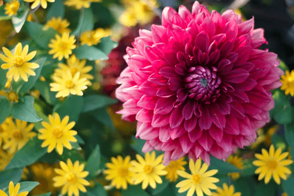 What are the Types of Flowering Plants?