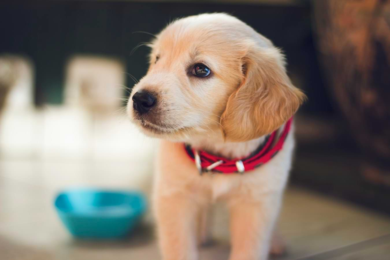 Dog Supplements And Vitamins