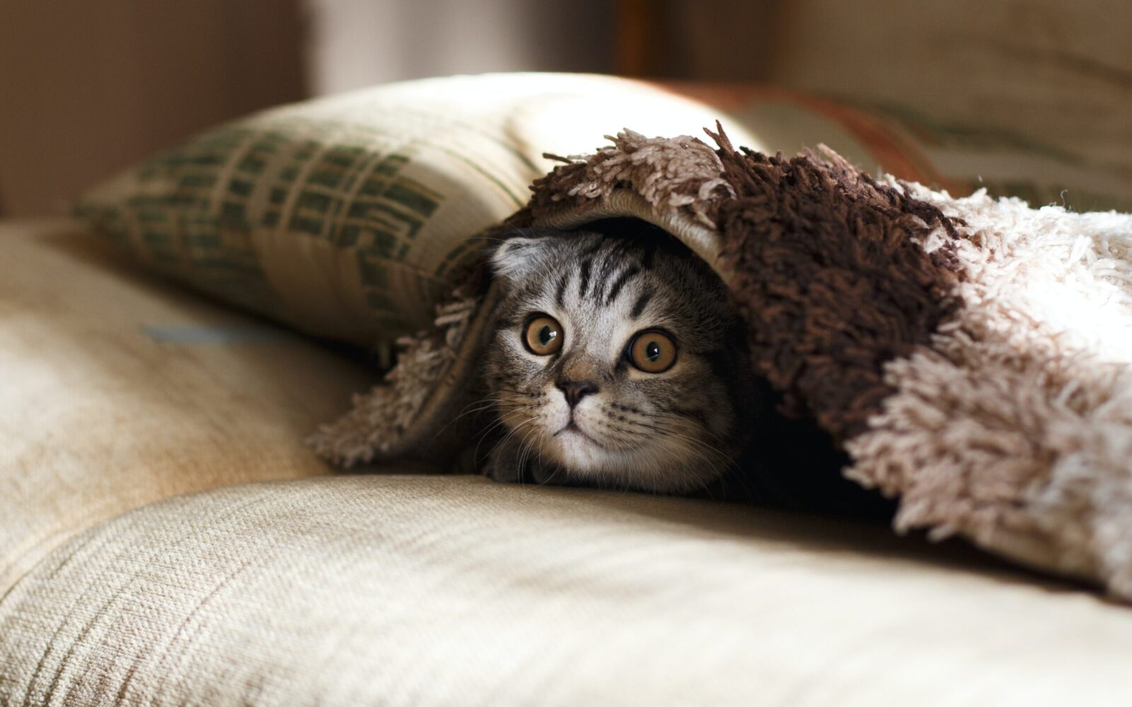 7 Tips for Raising a Happy, Well-Behaved Cat