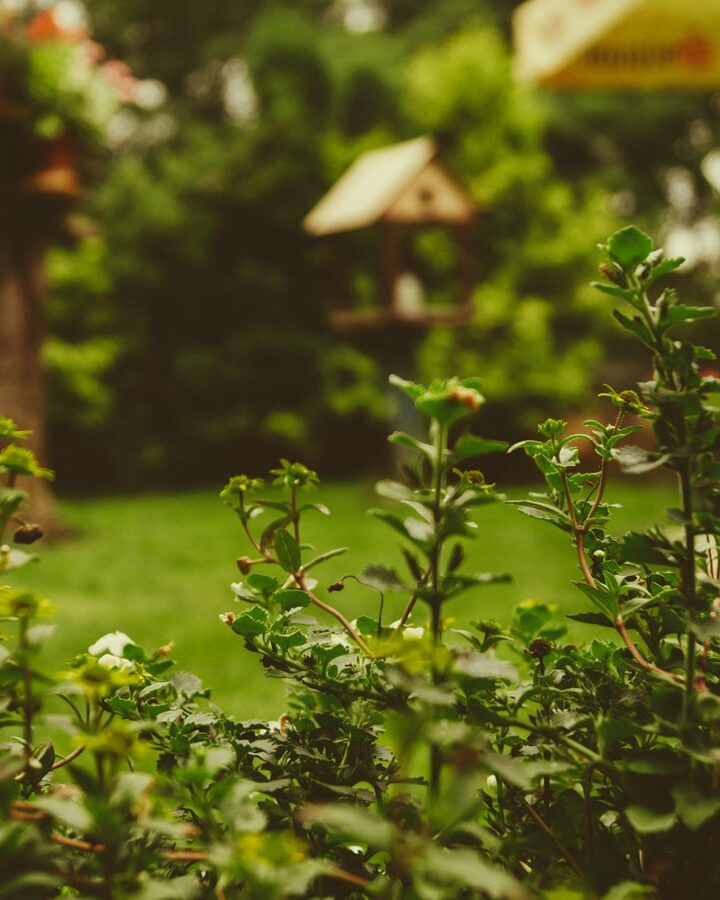 Enhance the Beauty of Your Backyard with These Tips