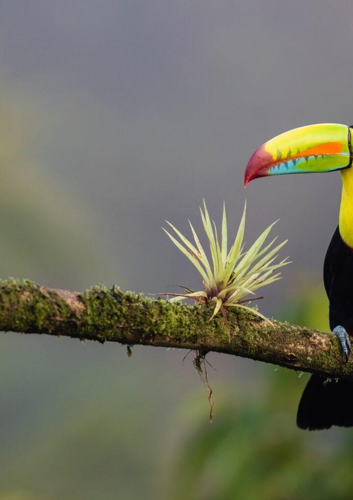 Travel Guide to Guanacaste, Costa Rica